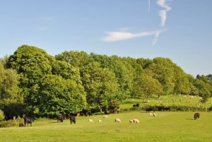 fordhall farm