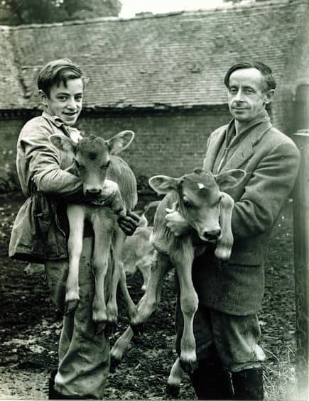 Arthur and Son, Robert with Jersey calves.