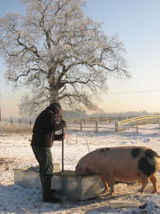 Ben and Pigs Jan 2010 (3)