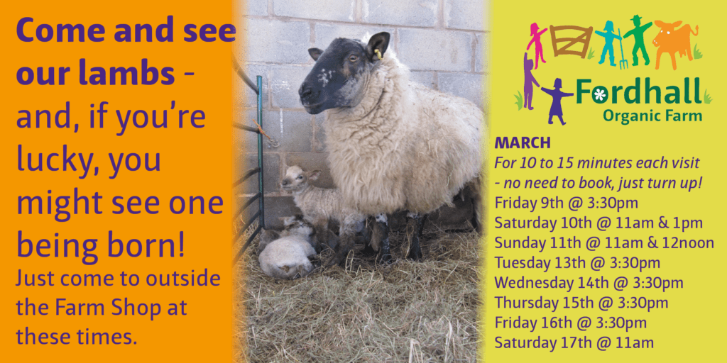 Come and See Our Lambs @ Fordhall Farm