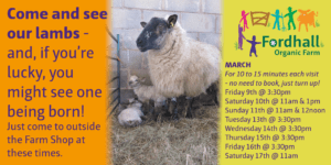 See our Mums & Lambs - at specific times @ Fordhall Organic Farm | Tern Hill | England | United Kingdom