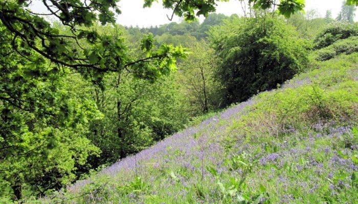 Beautiful Shropshire views at fordhall organic farm