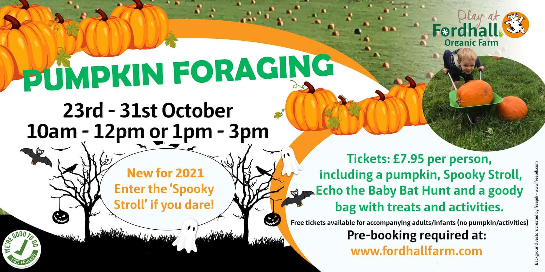 Pumpkin Foraging Shropshire Farm 2021